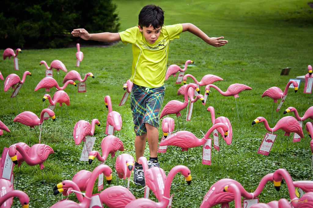 Dance of the Forbidden Flamingo